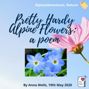 Pretty Hardy Alpine Flowers blog post
